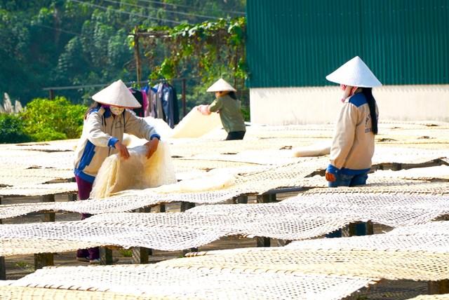 Cơ sở sản xuất miến dong - sản phẩm OCOP trên địa bàn huyện Bình Liêu, tỉnh Quảng Ninh.