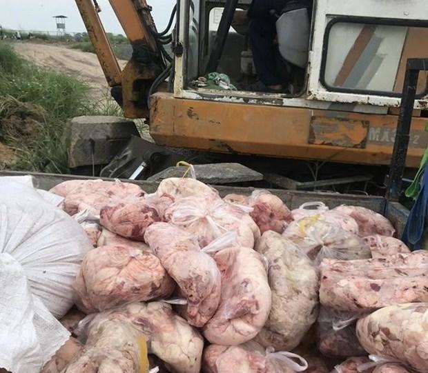 Chuẩn bị tiêu hủy sản phẩm thịt lợn bốc mùi hôi thối. Ảnh : TTXVN.