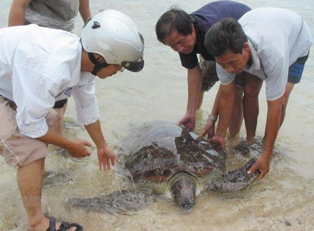 Vườn quốc gia Bái Tử Long: Thả một cá thể rùa quý hiếm về biển