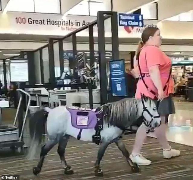 Nữ hành khách mang ngựa lên máy bay Mỹ - 1