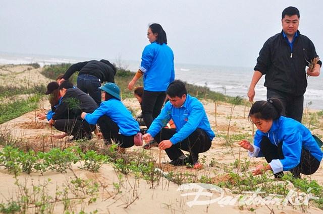 Tuổi trẻ Quảng Bình trồng 2.000 cây phi lao chắn cát