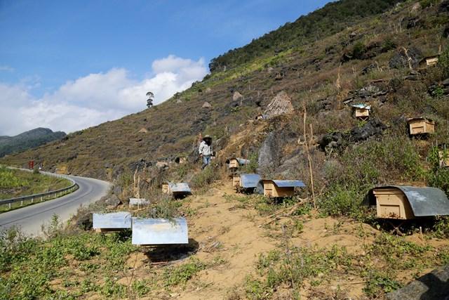 [ẢNH] Nuôi ong trên cao nguyên đá - 6
