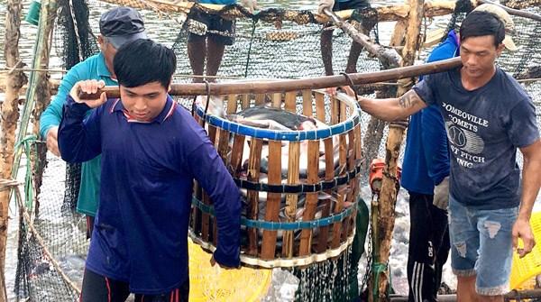 Đồng bằng sông Cửu Long: Vui, buồn nông dân