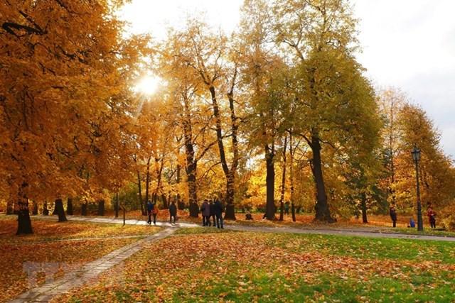 [ẢNH] Rực rỡ mùa thu vàng nước Nga - 7