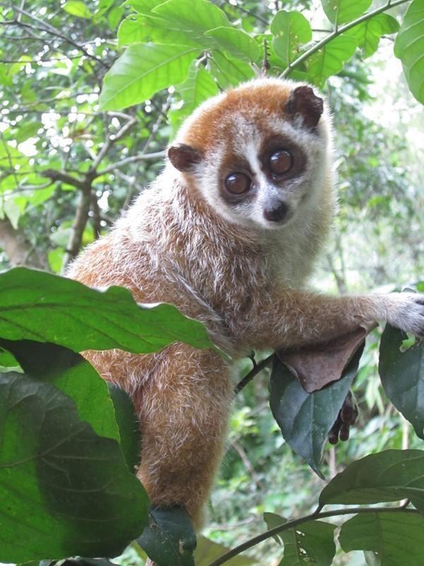 Vườn quốc gia Vũ Quang: Gìn giữ sự đa dạng sinh học - 1