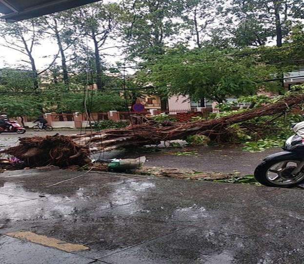 Bình Định, Phú Yên thiệt hại nặng do bão số 5 - 2