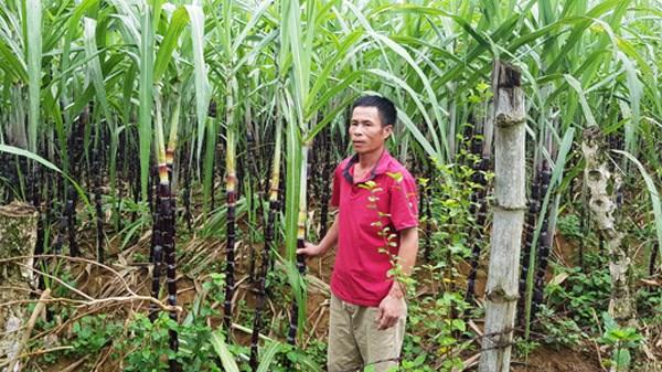 Lãng phí tài nguyên đất ở các nông, lâm trường - Kỳ I: Quản lý theo kiểu 'phát canh, thu tô'