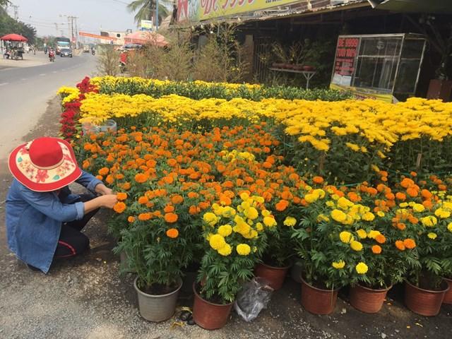 Hoa đẹp, vẫn ít người mua