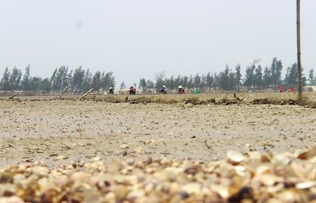 Hà Tĩnh: Ngao, sò chết hàng loạt chưa rõ nguyên nhân