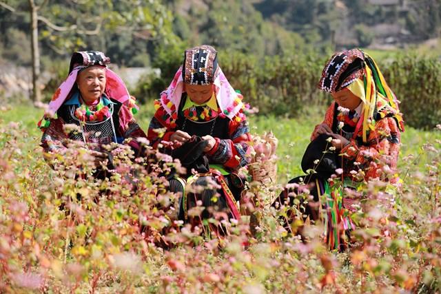 'Sắc hồng cao nguyên đá'- Tôn vinh giá trị văn hóa Hà Giang