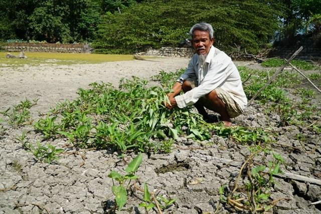 Quảng Ngãi: Hơn 1.000 ha đất sản xuất nông nghiệp bỏ hoang - 1