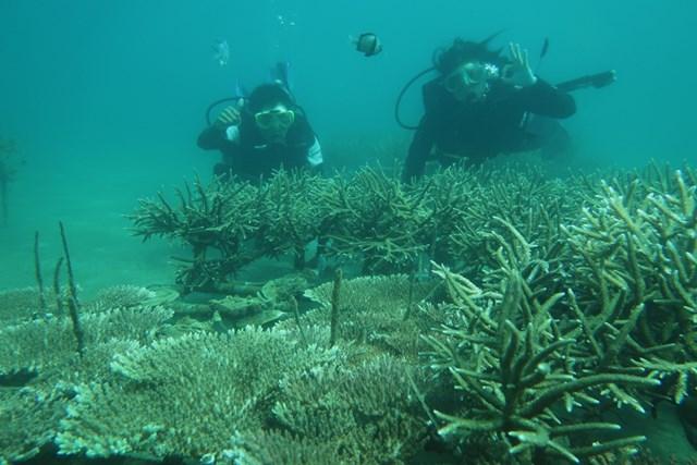 Nỗ lực bảo vệ san hô