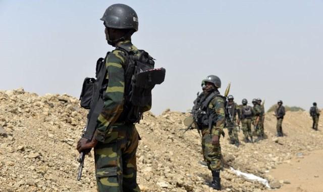 12 con tin châu Âu được giải cứu ở Cameroon