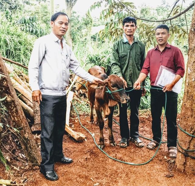 Đắk Lắk: Tặng bò sinh sản cho hộ nghèo huyện Krông Búk