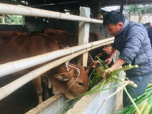 Chống rét cho đàn gia súc