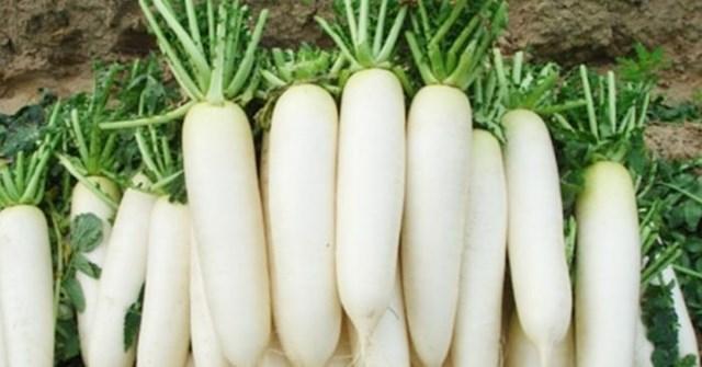 Công dụng từ củ cải trắng