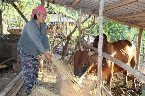 Mường Lát, Thanh Hóa: Giúp người dân vùng đặc biệt khó khăn gỡ nghèo - 1