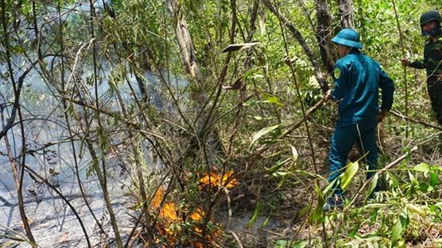 Hạn mặn khốc liệt, nguy cơ cháy rừng cao - 1