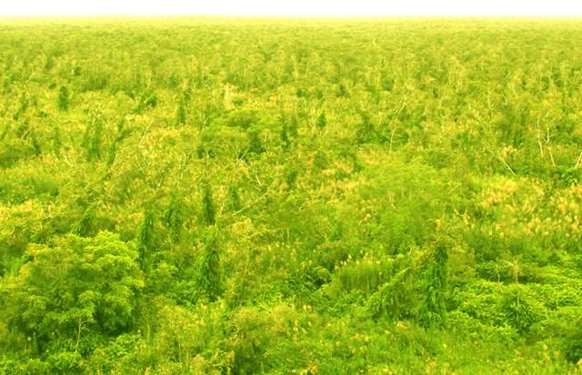 Đồng bằng sông Cửu Long: Hàng ngàn ha rừng báo động cháy