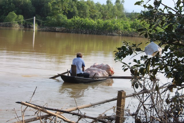 'Giải cứu' bưởi cho nông dân vùng lũ – lan tỏa hành động đẹp