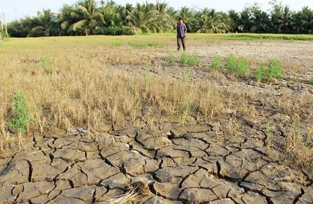 Hạn hán và xâm nhập mặn tại Đồng bằng sông Cửu Long: Ngày càng gay gắt
