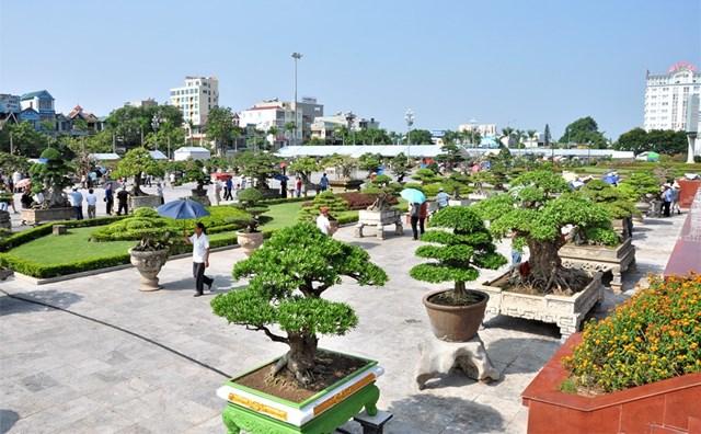 Lần đầu tiên Việt Nam tổ chức lễ hội Bonsai & Suiseki Châu Á - Thái Bình Dương - 1