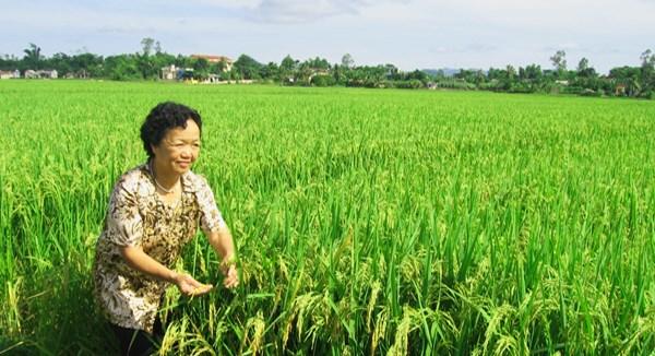 PGS.TS Nguyễn Thị Trâm: Hết lòng với  nông nghiệp Việt Nam