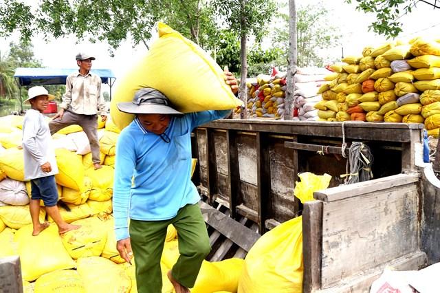 Cần Thơ: Hơn 254 nghìn tấn lúa, gạo đang tồn kho