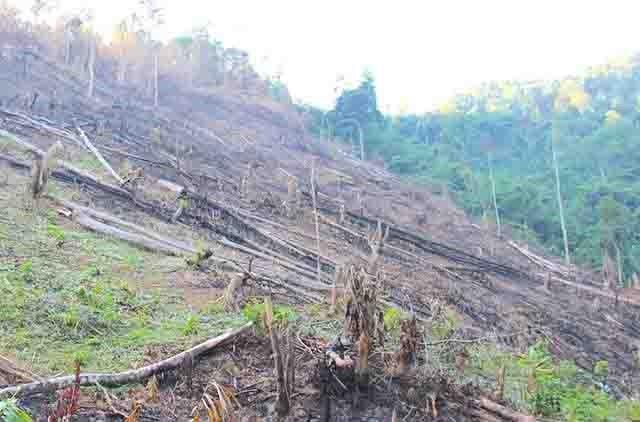 Để xảy ra phá rừng, 5 cán bộ xã bị kỷ luật