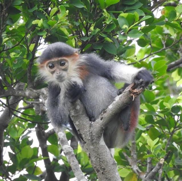 Hà Tĩnh: Phát hiện 8 loài linh trưởng tại Vườn quốc gia Vũ Quang
