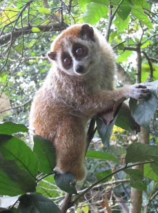 Hà Tĩnh: Phát hiện 8 loài linh trưởng tại Vườn quốc gia Vũ Quang - 2