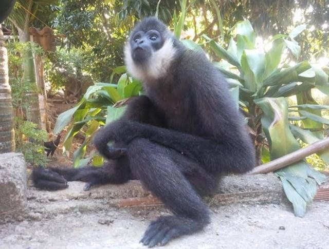 Hà Tĩnh: Phát hiện 8 loài linh trưởng tại Vườn quốc gia Vũ Quang - 1