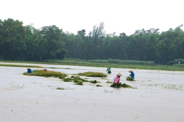 Quảng Nam: Lật đò trên sông Vu Gia, 6 người mất tích