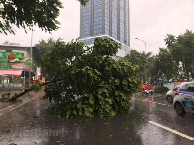 [ẢNH] Cây cối bị 'quật đổ' tại Hà Nội do ảnh hưởng của bão số 3 - 8