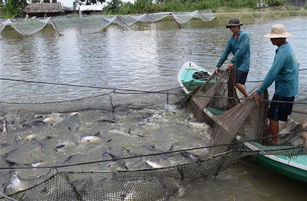 Xây dựng thương hiệu cá tra Việt Nam: Khó nhưng phải làm - 1