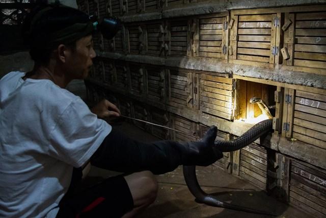 [ẢNH] Kiếm bạc tỷ mỗi năm nhờ nghề nuôi rắn độc - 5