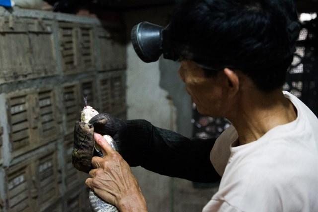 [ẢNH] Kiếm bạc tỷ mỗi năm nhờ nghề nuôi rắn độc - 2
