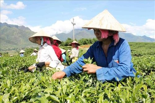 Lai Châu: Từng bước giảm nghèo bền vững