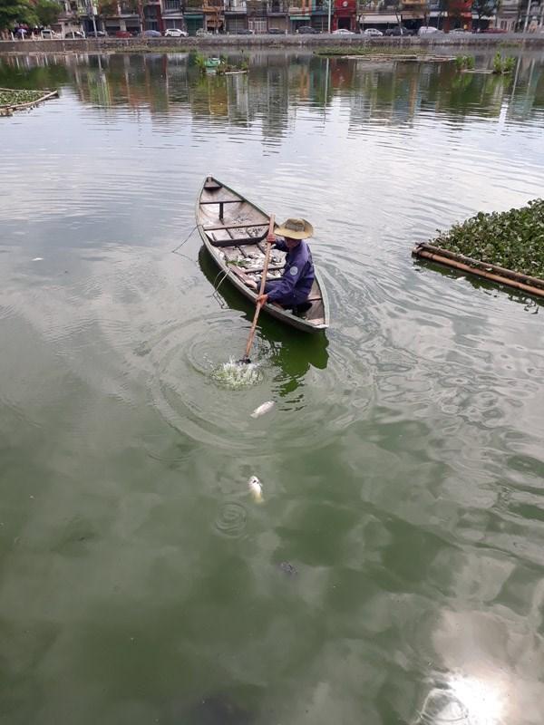 Tìm ra nguyên nhân cá chết nổi trắng hồ nước trung tâm TP Đà Nẵng