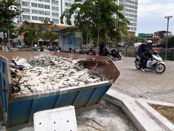 Tìm ra nguyên nhân cá chết nổi trắng hồ nước trung tâm TP Đà Nẵng - 1