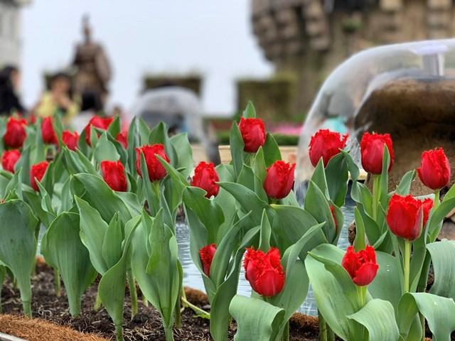 Xuân ngất ngây ở 'xứ hoa nở trong mây' - 2