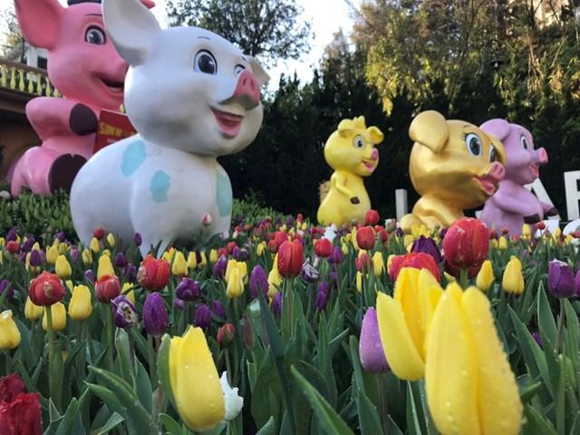 Xuân ngất ngây ở 'xứ hoa nở trong mây' - 5