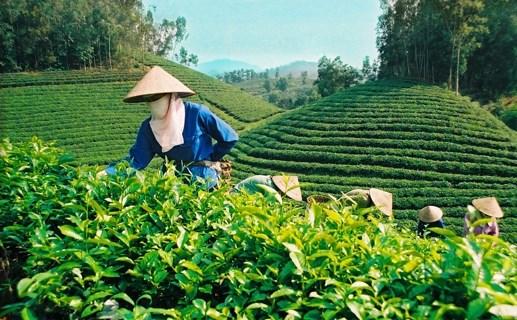 'Cởi trói' cho nông nghiệp