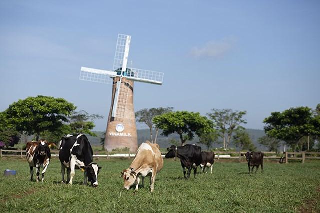 Dấu ấn mang tên Vinamilk trong phát triển ngành chăn nuôi bò sữa công nghệ cao Việt Nam - 4