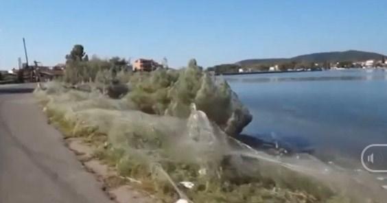 Ngỡ ngàng cảnh nhện 'mở tiệc' kéo dài 300m bờ biển Hy Lạp