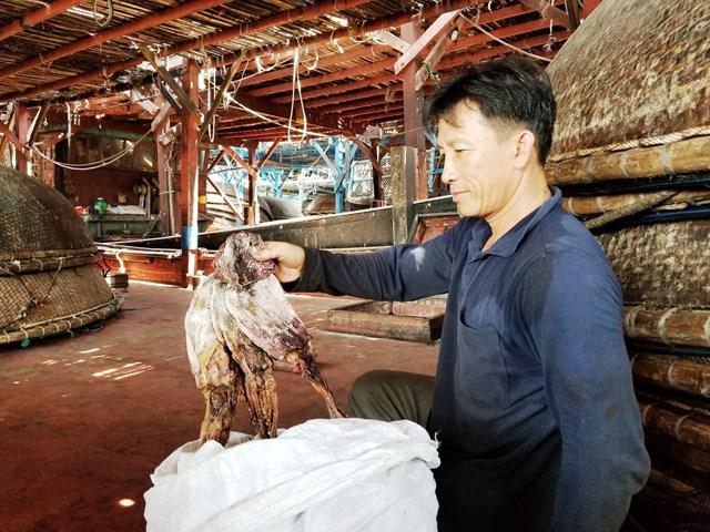 Quảng Nam: Hàng trăm tấn mực 'nằm chờ' vì không có DN thu mua(?!) - 1