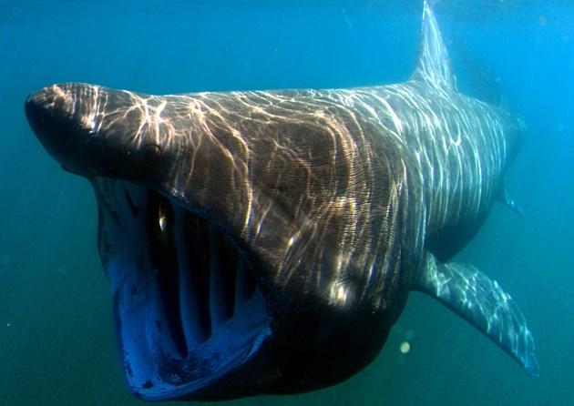 Quái vật khổng lồ xuất hiện ở bãi biển Tây Ban Nha