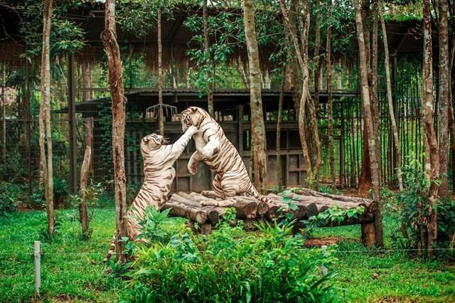 Vinpearl Safari điểm đến của bảo tồn và phúc trạng động vật lớn nhất Đông Nam Á 2019 - 3