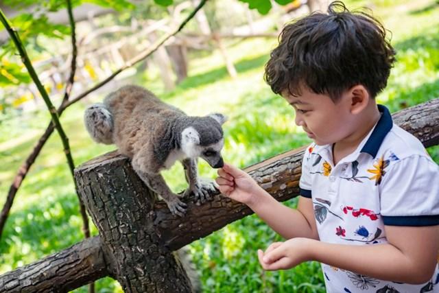 Vinpearl Safari điểm đến của bảo tồn và phúc trạng động vật lớn nhất Đông Nam Á 2019 - 5