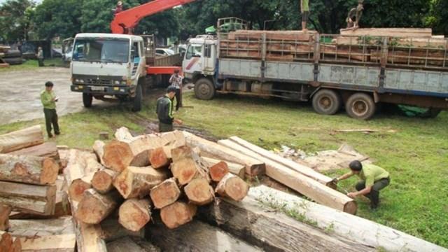 Một vụ vận chuyển gỗ lậu từ Kon Tum sang Gia Lai bị phát hiện.